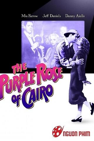 Đóa Hồng Tím Cairo