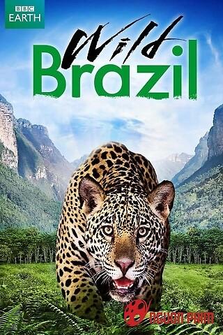 Thiên Nhiên Brazil Hoang Dã